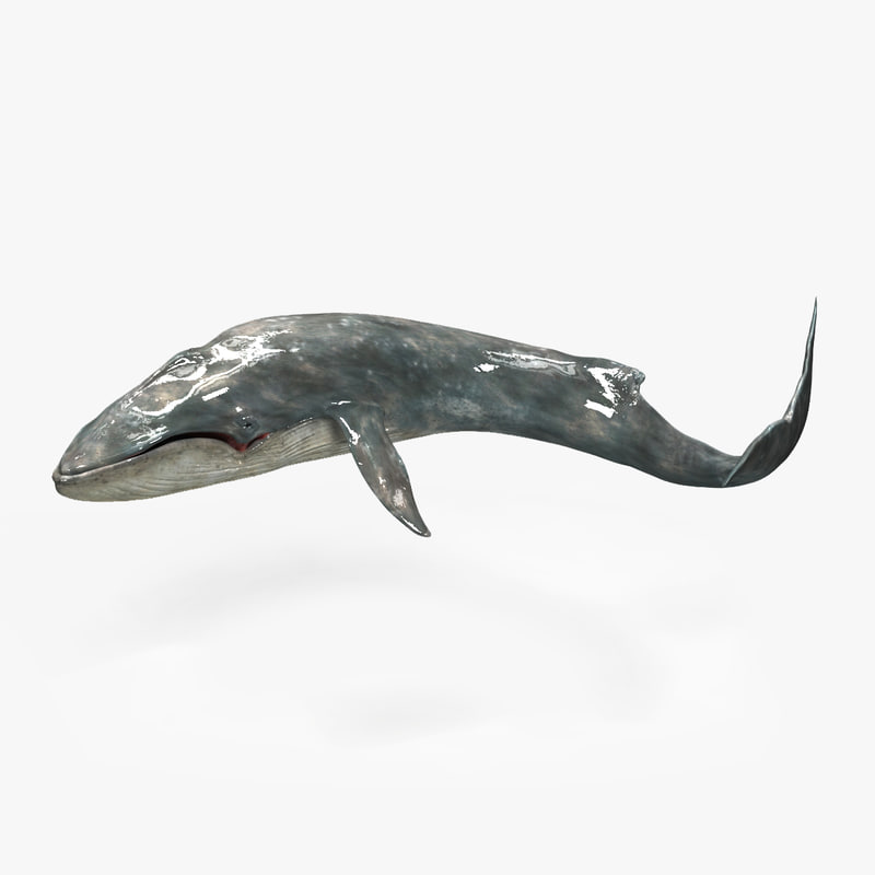 Whale_Render00.jpg