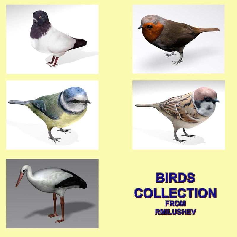Birds collection.jpg