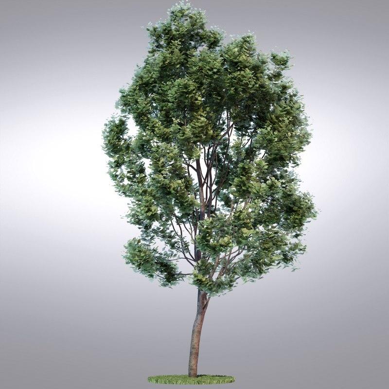 tree12_0001.jpg