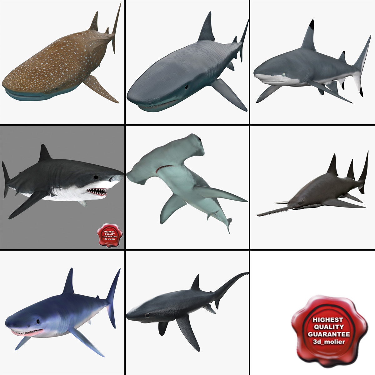 Sharks_Collection_v5_000.jpg