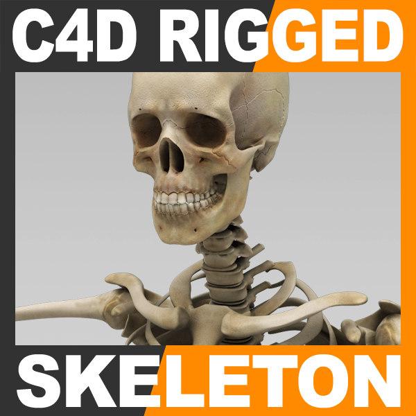Human Skeleton Cinema 4D Rigged 3D Models