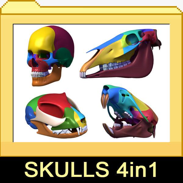 4-skull.jpg