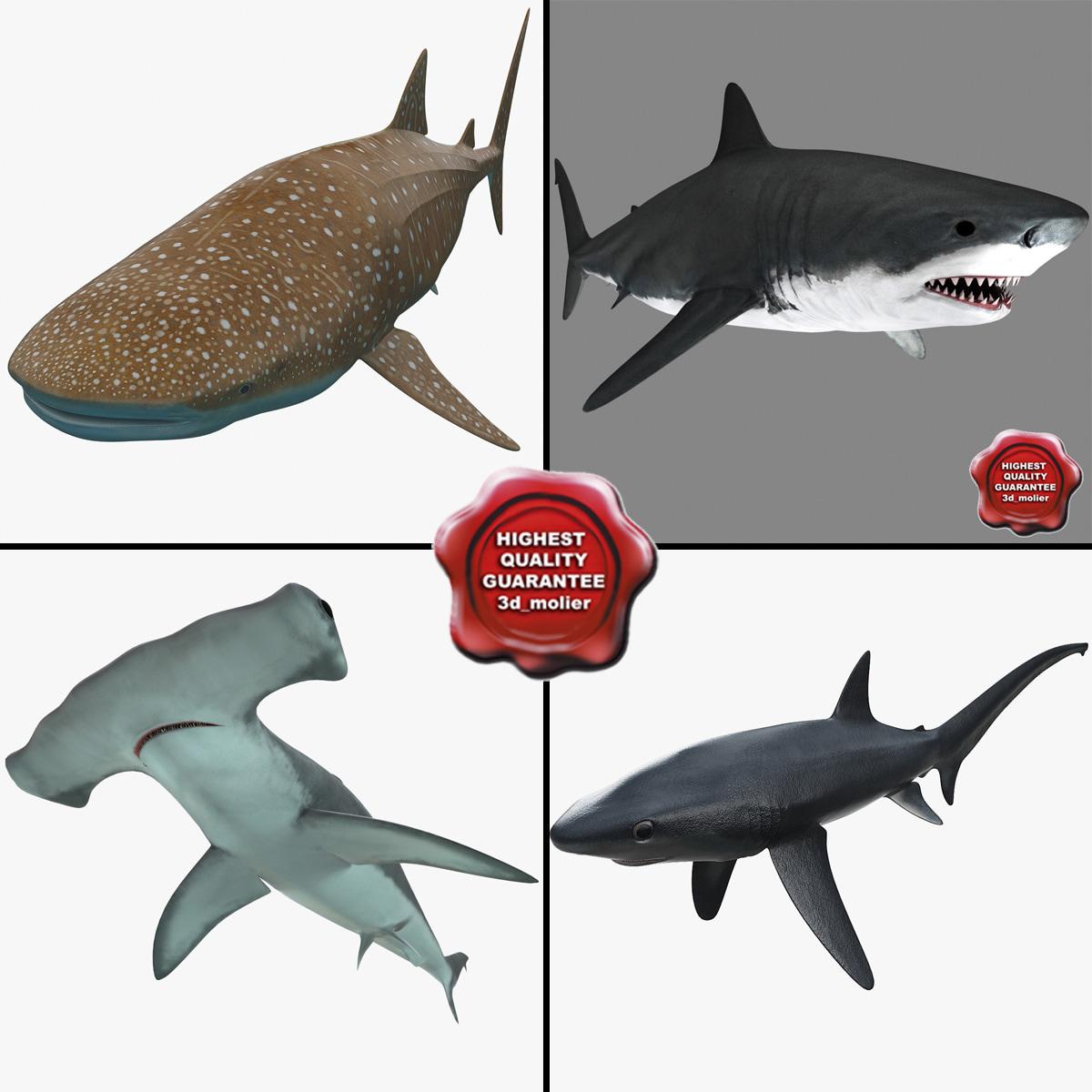 Sharks_Collection_v3_000.jpg