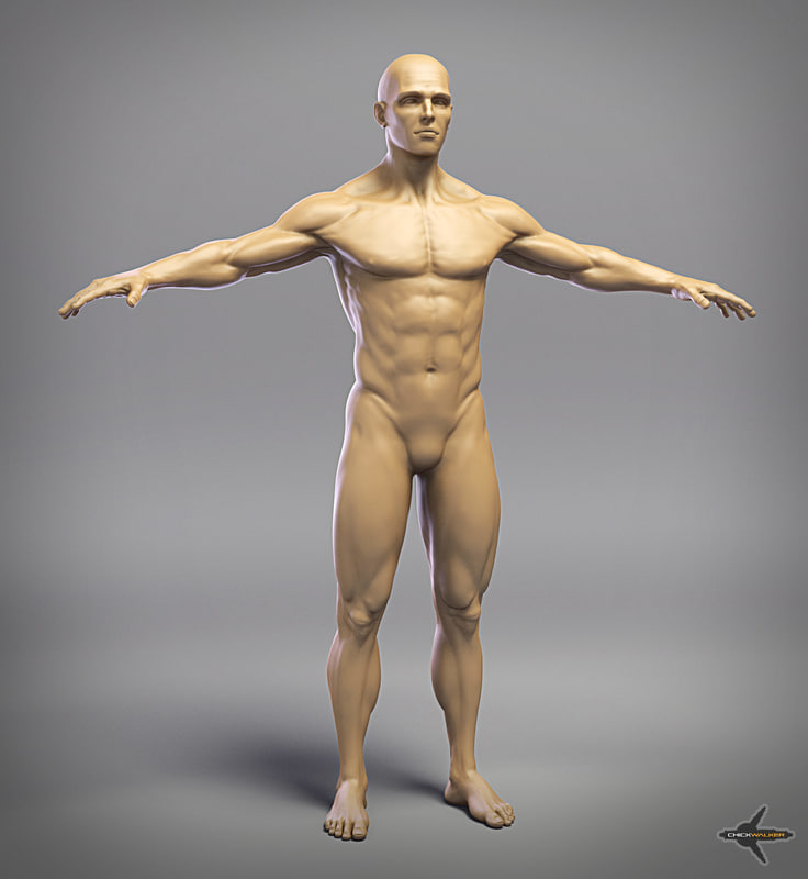 male_body_render_web.jpg