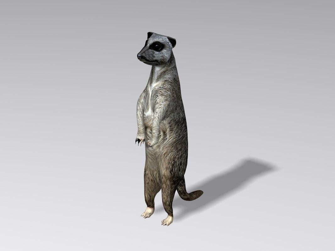 Meerkat1.jpg