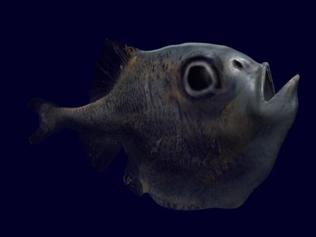 hatchetFish02.jpg