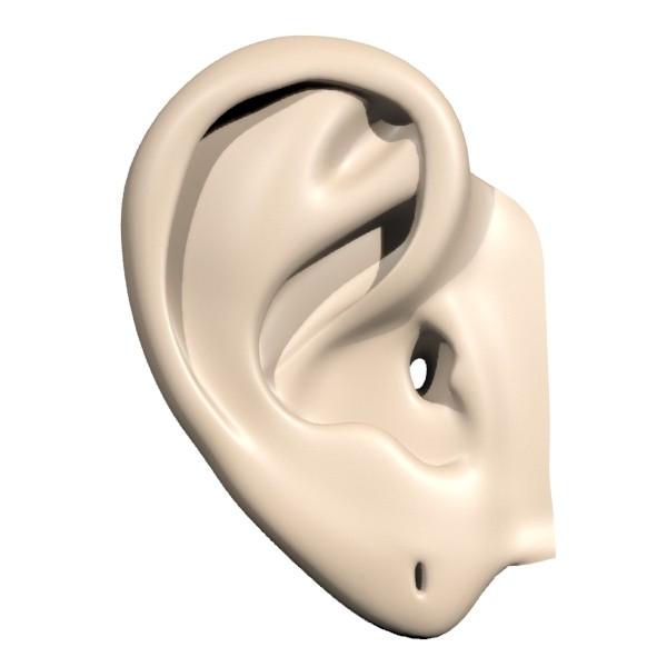 ear02.jpg