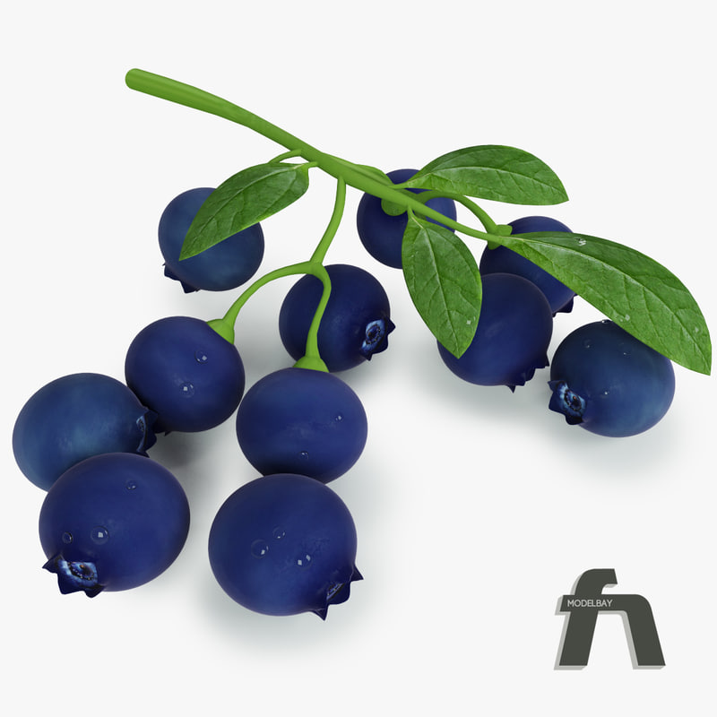 Blueberry_3d_model_vray_max_fruit_signature_.jpg