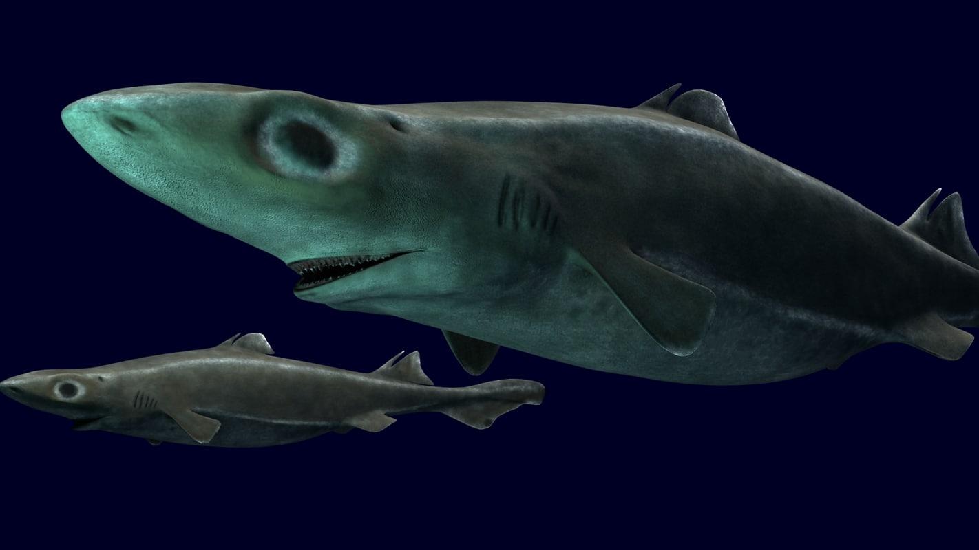 Lantern Shark.jpg
