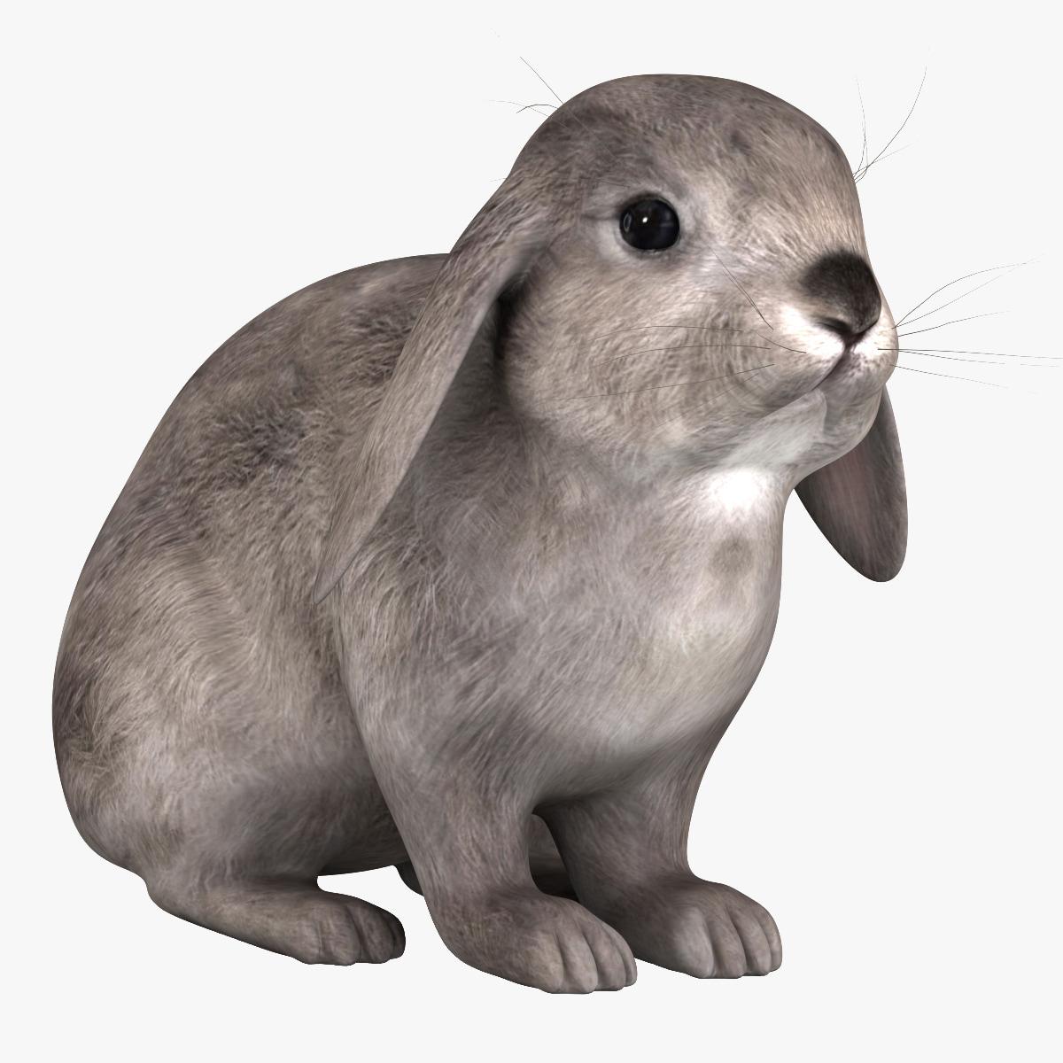 rabbit_grey_000.jpg