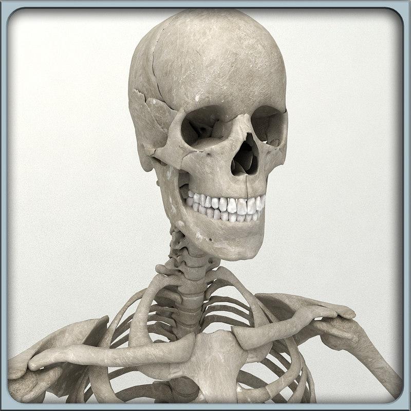 skeleton_render_06.jpg