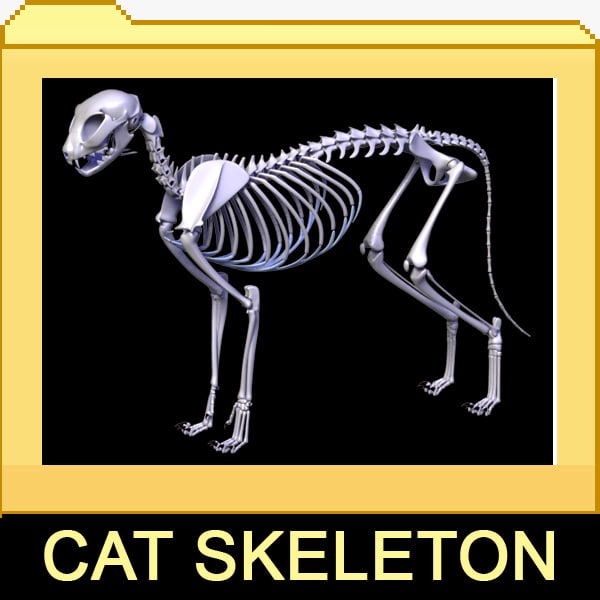 Cat_skeleton_leo3dmodels_000.jpg