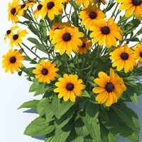 black-eyed susan 3D models