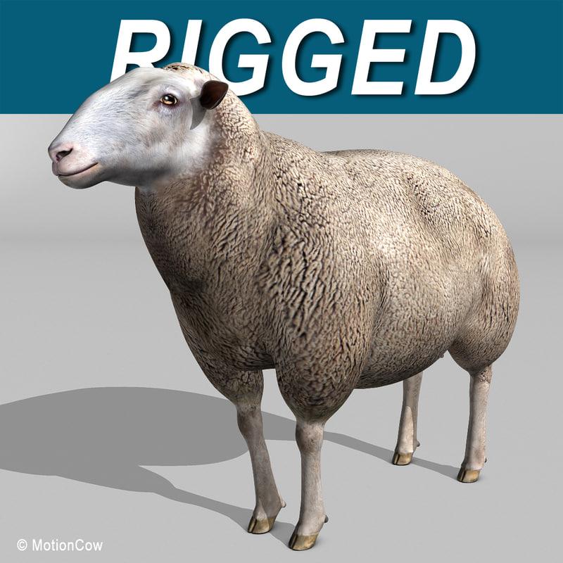 Sheep_A.jpg