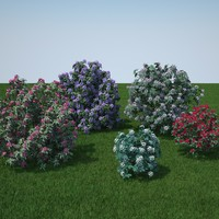 Rhododendron 3D models