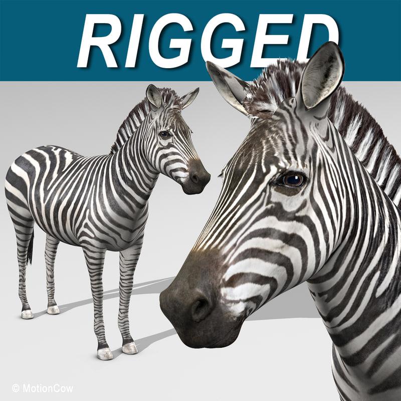 Zebra_A.jpg