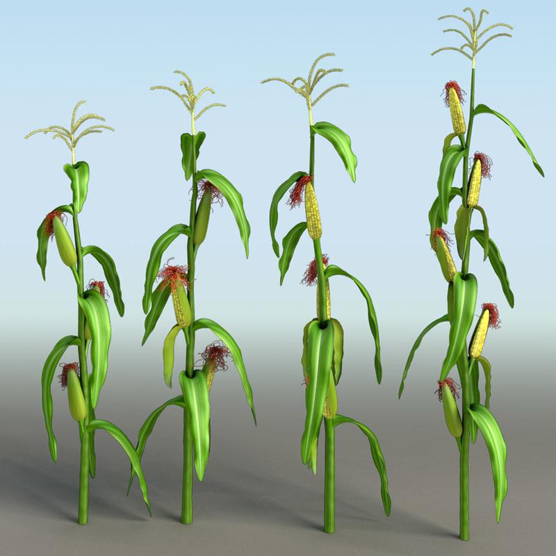 Corn-range.jpg