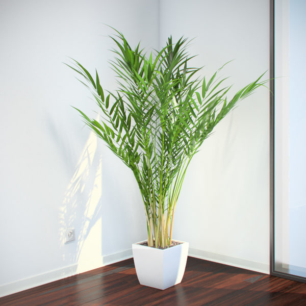 VP Areca Palm 3D Models