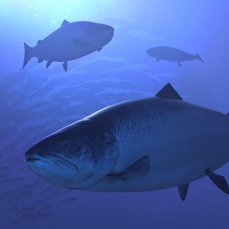 Salmon_oceanScene.JPG
