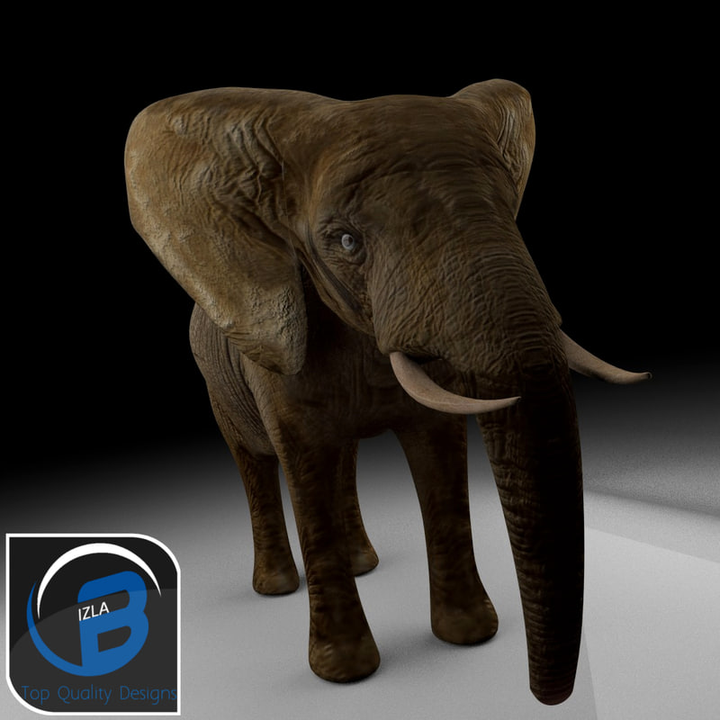 elephantfront .jpg