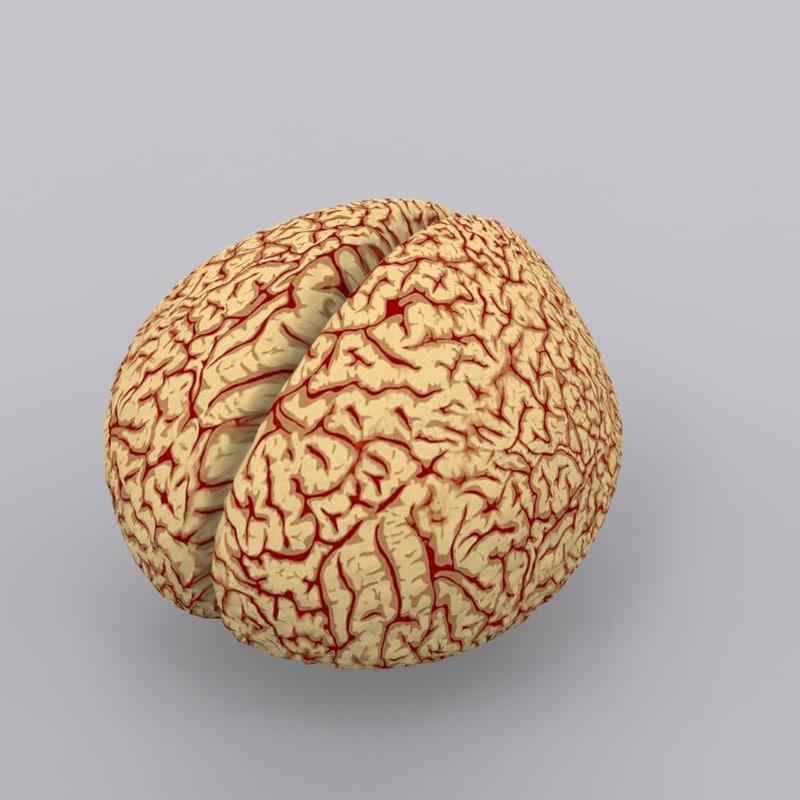 brain0001.jpg