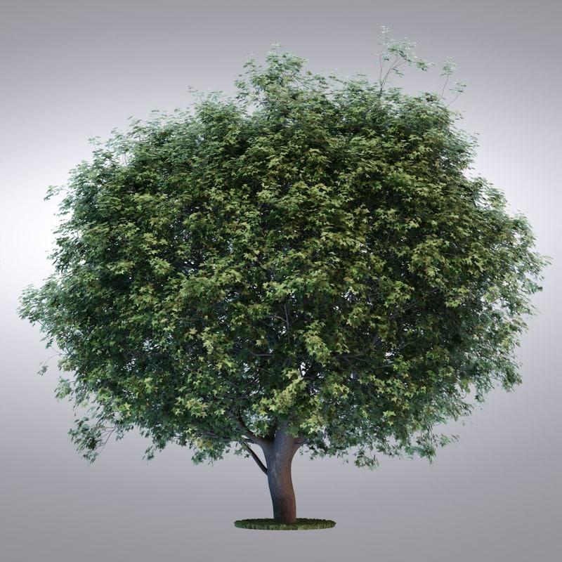 tree13_0002.jpg