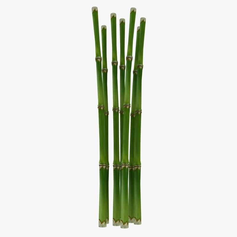 Fresh_Bamboo_01.jpg