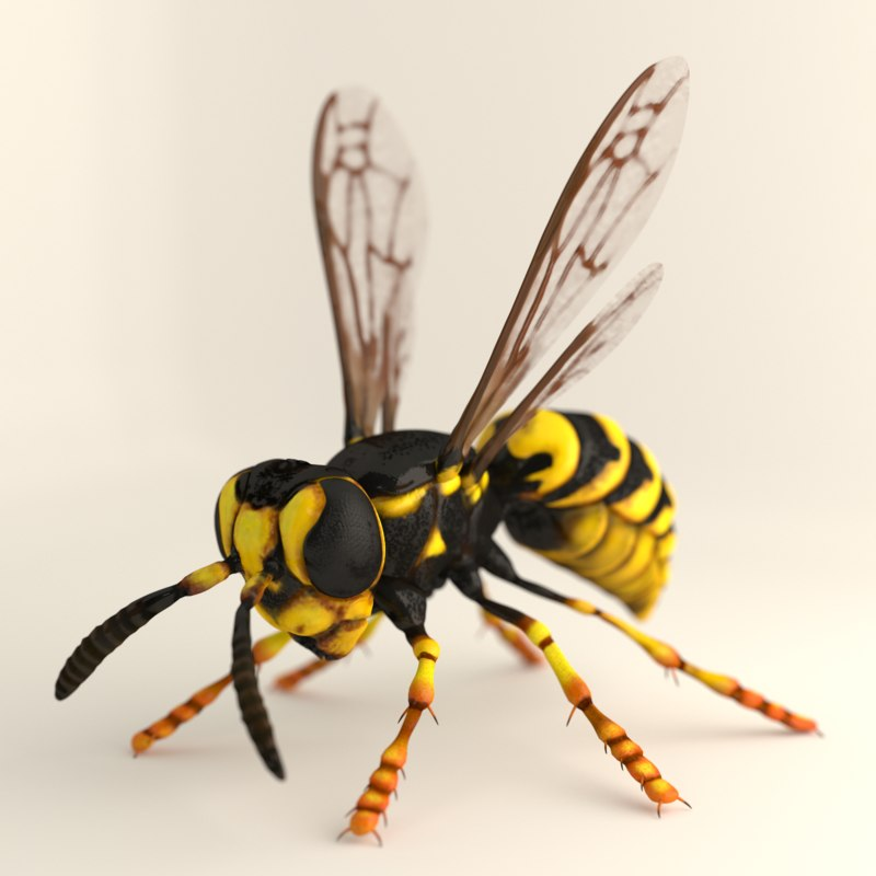 wasp render.png