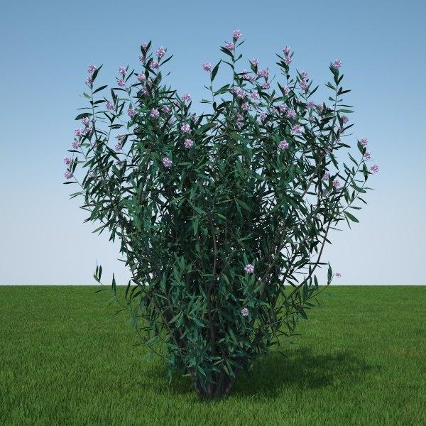 plant flowers c4d