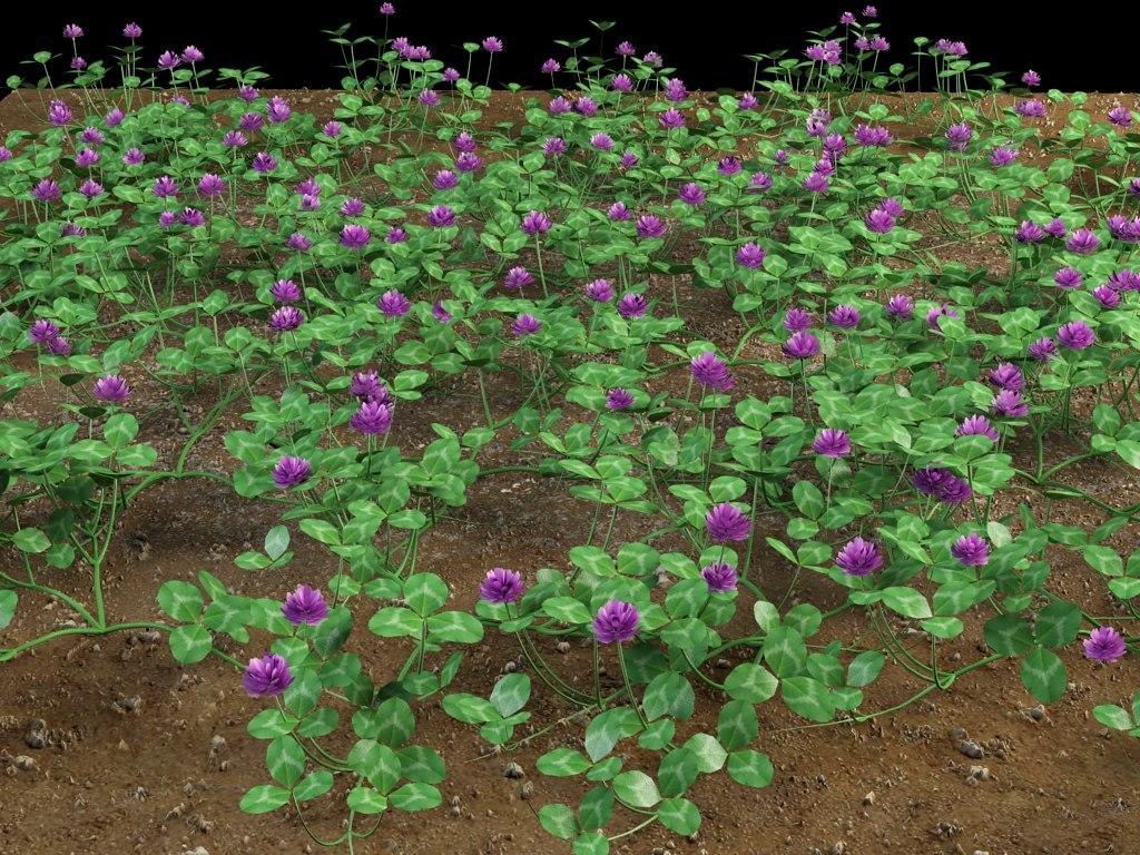 trifolium_4.jpg