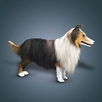Collie 3D models