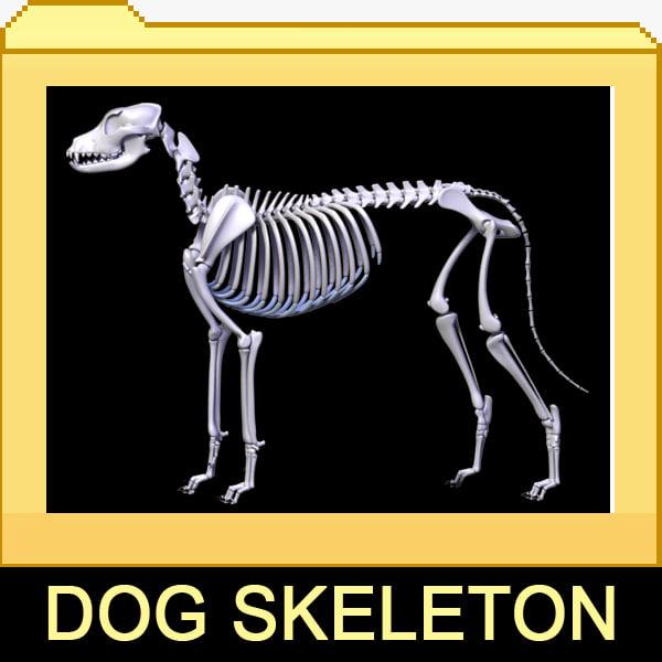 Canine Skeleton 2in1 3D Models