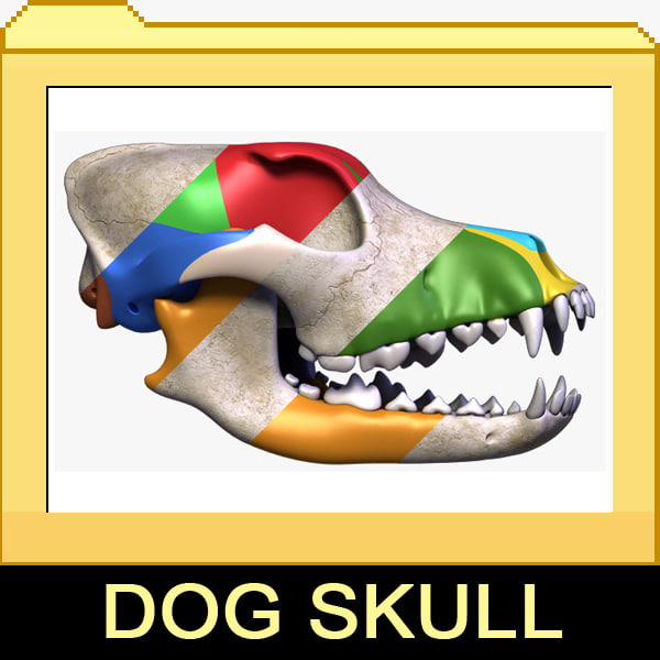 Dog Skull 2 in 1 3D Models
