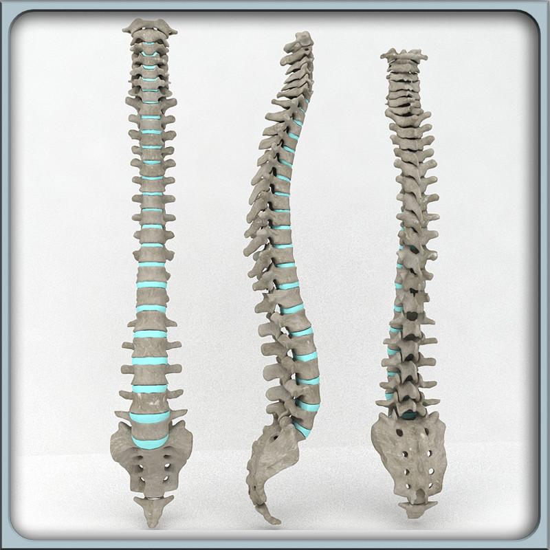 vertebral_column_00.jpg