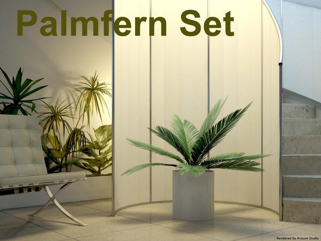 Palmfern1.jpg