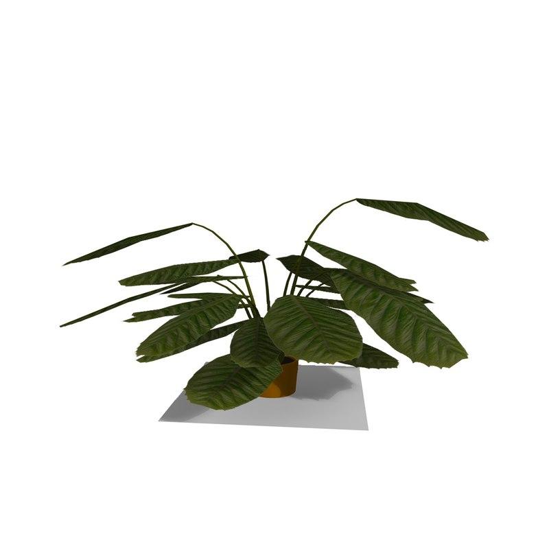 INDOOR PLANT 1.jpg