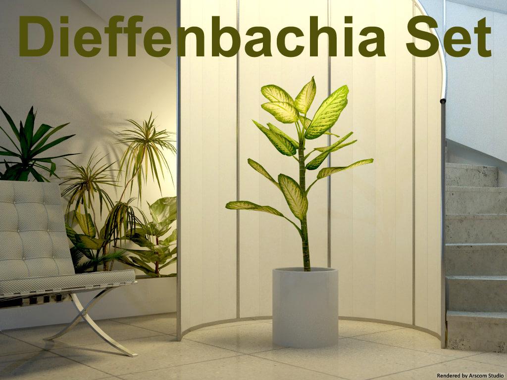 Dieffenbachia1.jpg