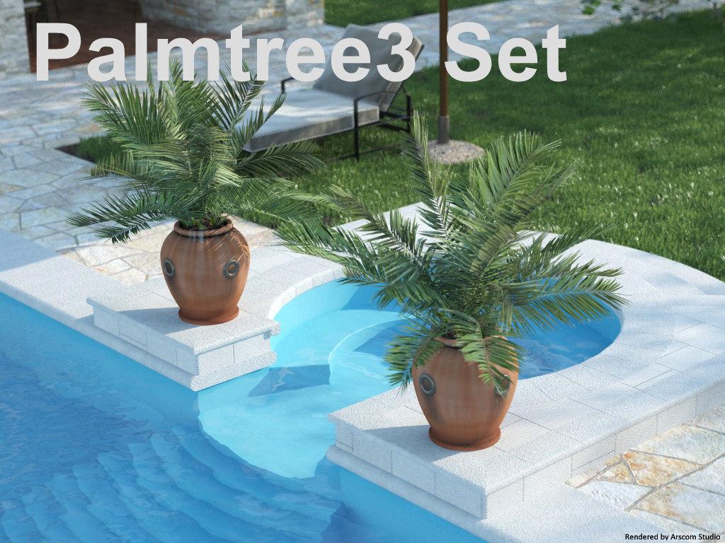 Palmtree 3_1.jpg