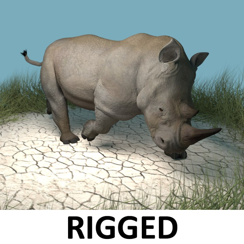 White Rhinoceros Rigged CG Model for Sale