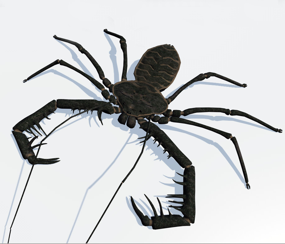whip_scorpion_3D-model_Andreas_Piel.bmp