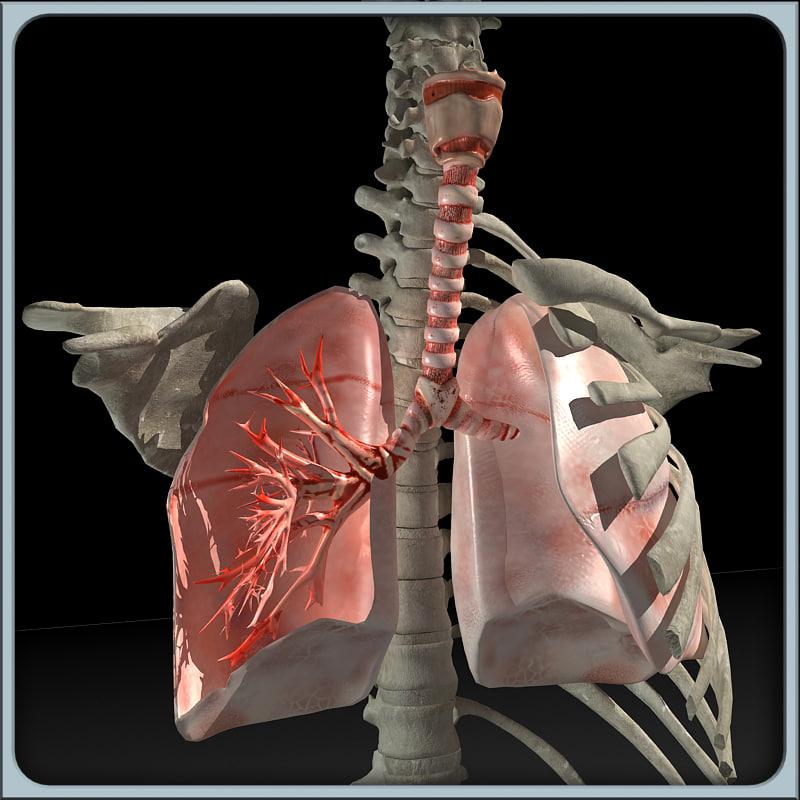 Lung_torso_render_00.jpg