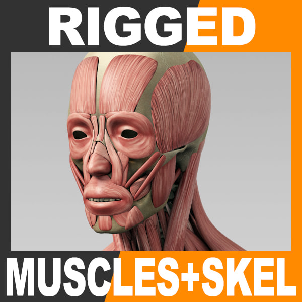 RiggedMuscSkel_th001.jpg