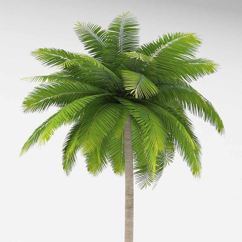 Palm_11.JPG
