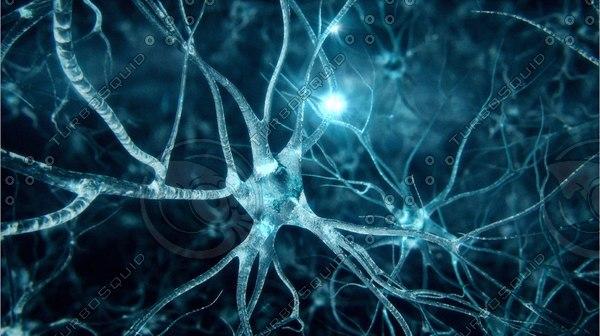 Neurons-fly-through 3D Models