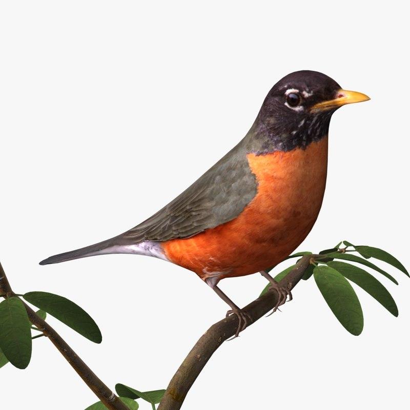 3d 3ds american robin birds ab American Robin Bird