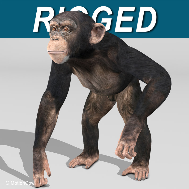 Chimpanzee_AA.jpg