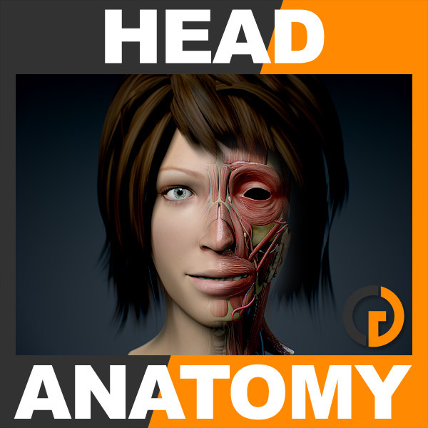 FemaleHeadAnatomy_th001.jpg