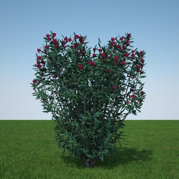 Nerium Oleander red