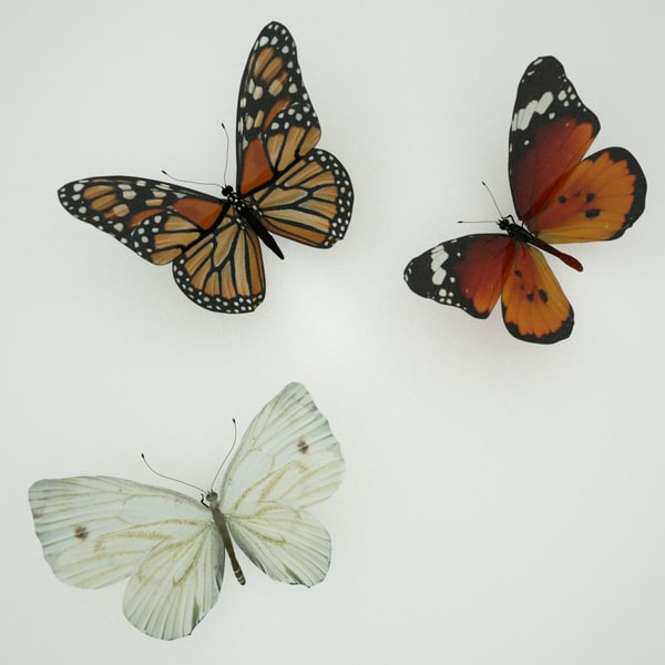 Butterfly Pack Stock Photography