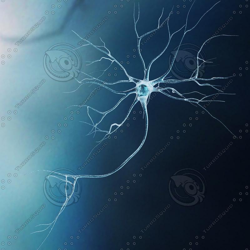 neurons-4.JPG
